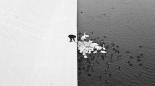BW man feeds swans facebook com MarcinRyczekFotografia