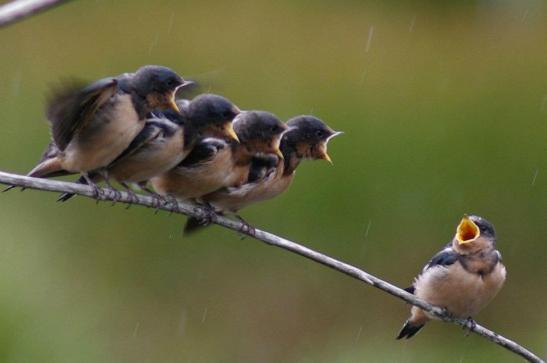 feedback-birds